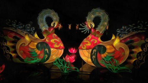 pelican bird illuminated