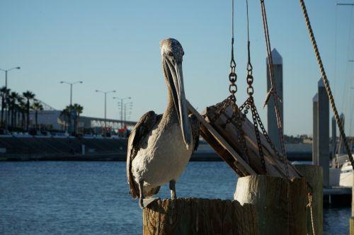 pelican boat sea