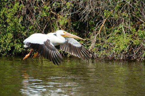 pelican utah landing