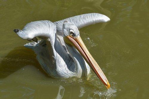 pelican  bird  pelican backpack rosé