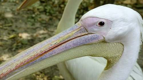 pelican  basking  sun
