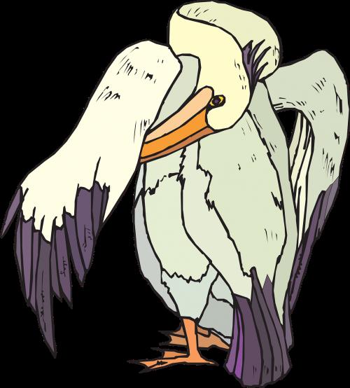pelican seabird preening