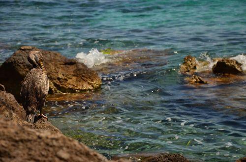pelican sea water