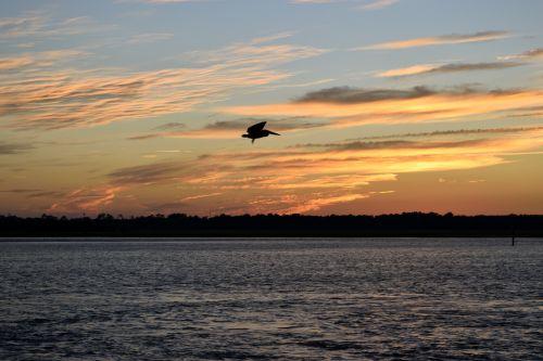 pelican, paukštis, paukštis, laukinė gamta, saulėlydis, upė, florida, gamta, vėdinimas & nbsp, paukštis, vandens paukštis, pelikanas, plaukiantis per upę