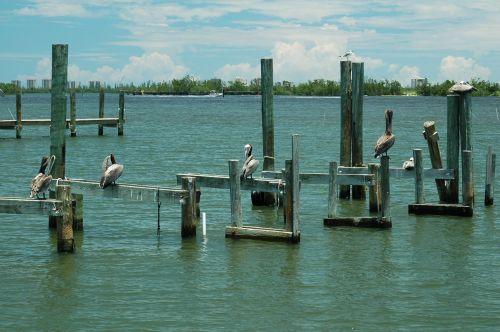 Pelican On Dock Pilings