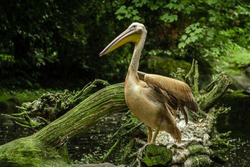 pelikan lake zoo