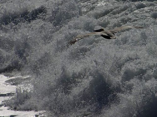 pelikan wave glide