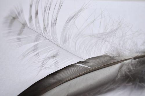 pen bird contrast