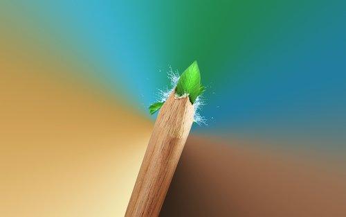 pencil  leaf  green leaf