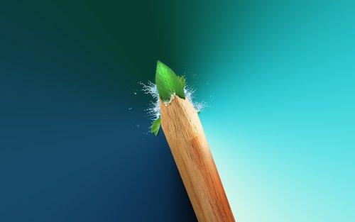 pencil  green leaf  leaf