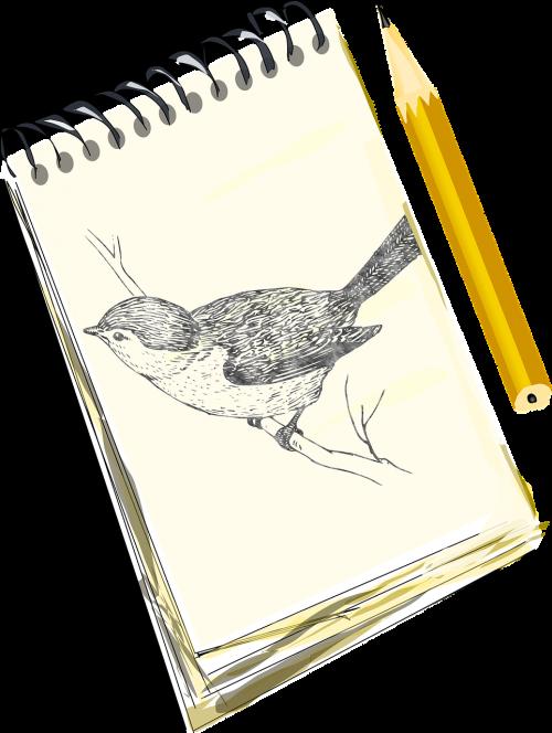 pencil sketch bird