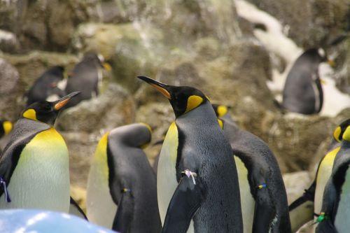 penguin group animal