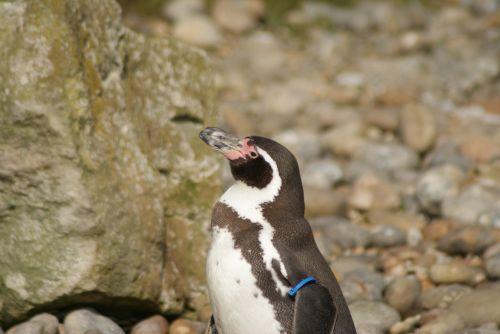 penguin baby zoo