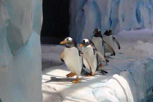penguin zoo bird