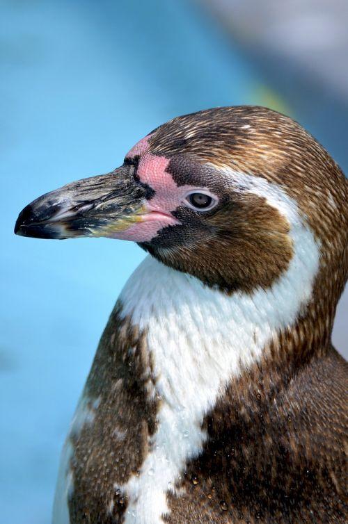 penguin glasses penguin humbo