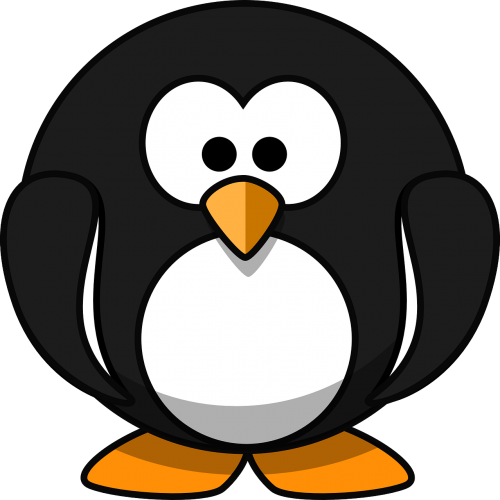 penguin animal bird