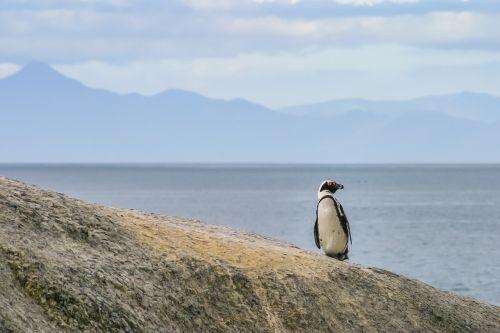 penguin jackass lonely