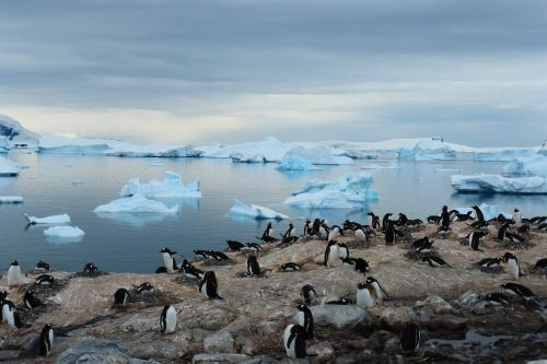 penguin island blue