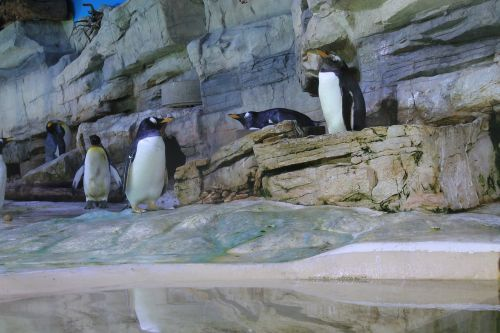 penguin colony penguins
