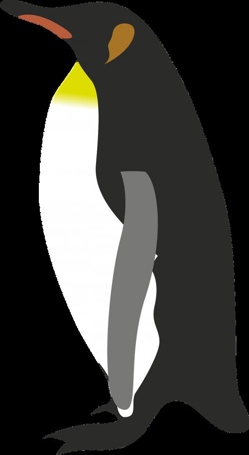 penguin design animal