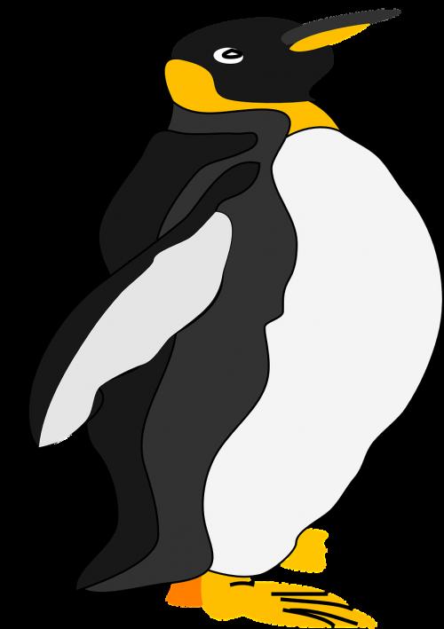 penguin animal bird