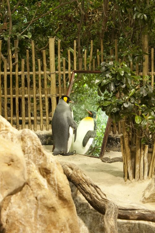 penguin zoo conceited