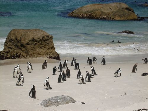 penguins sand ocean