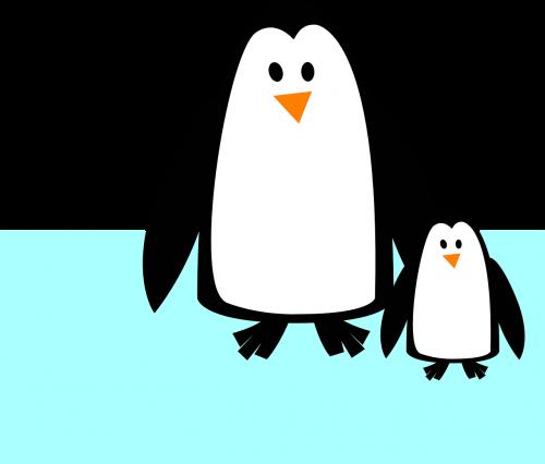penguins animal baby-penguin