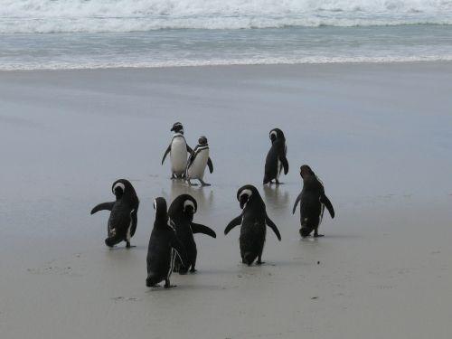 penguins antarctica southern ocean