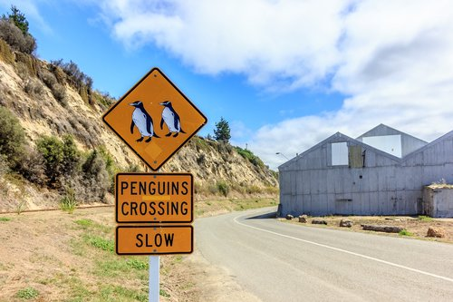 penguins  sign  penguins crossing