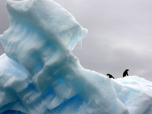 penguins iceberg polar