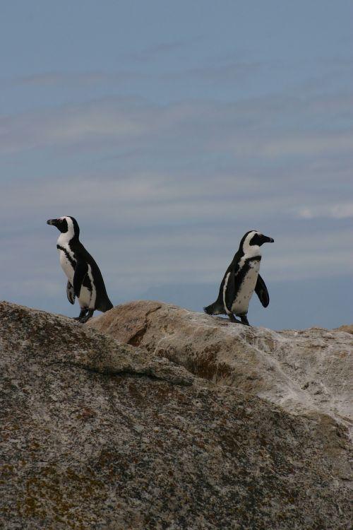 penguins animals antarctic