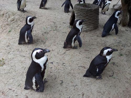 penguins zoo münster