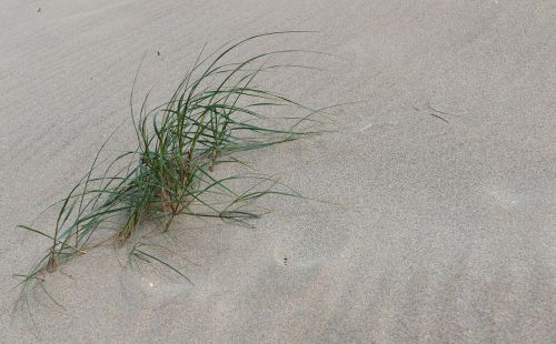 penhale sands perranporth cornwall