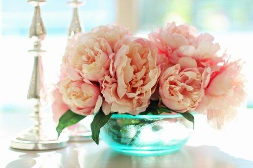 peonies  flowers  floral