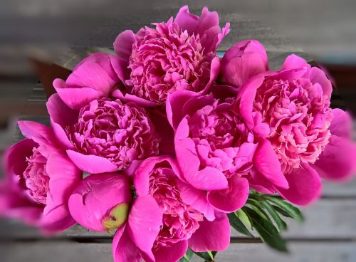 peony bouquet large flowers