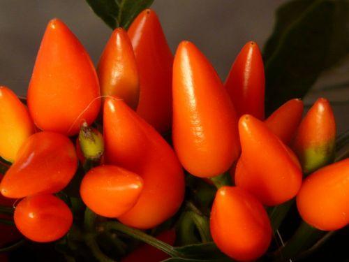 peppers pods orange