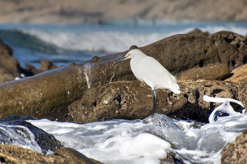 perched  tide-pools  bird