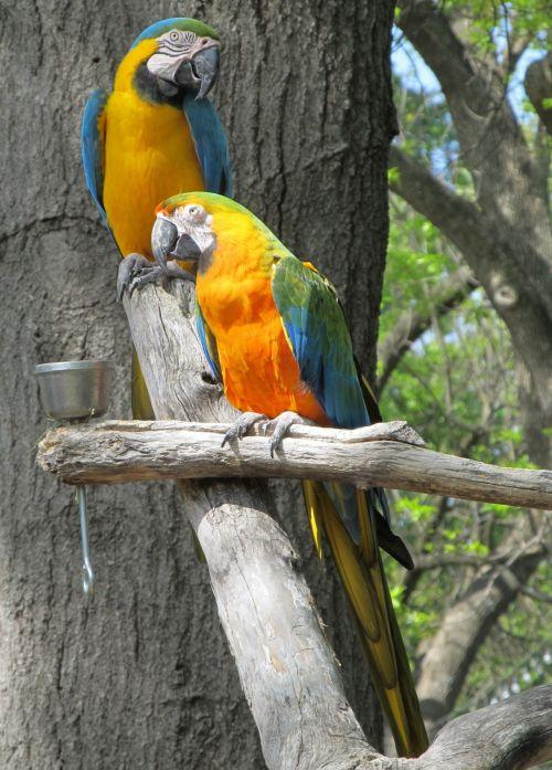 Perched Parrots