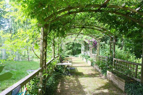 pergola shady walk garden walk