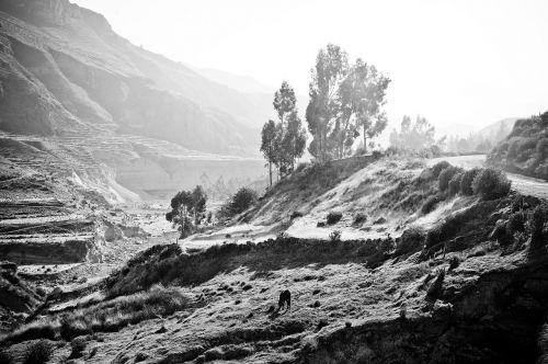 peru the colca valley inca