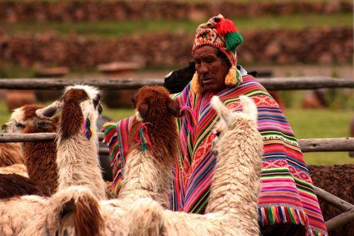 peru llama animals