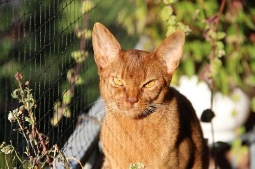 pet animals cat