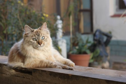 pet gata cat