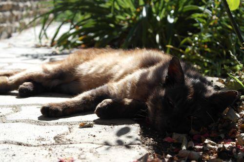pet tomcat rest