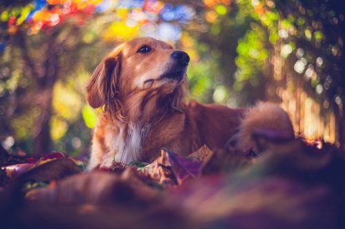 pet dog puppy