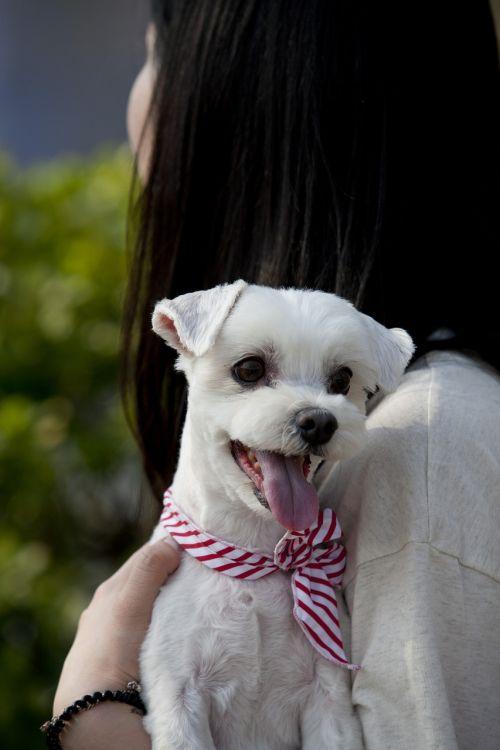 pet dogs canine companion animal
