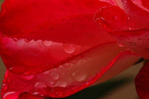 petal  wet petal  wet