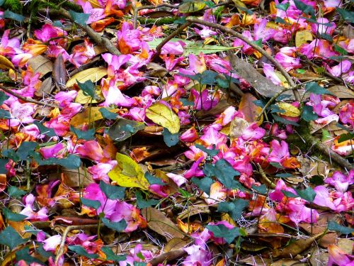 petals colorful shades of red