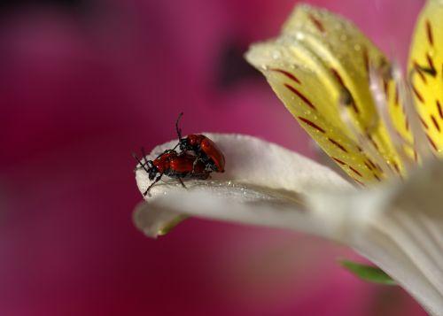 petals insecta multiplication